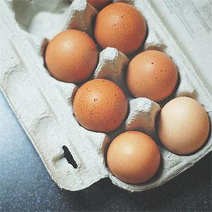 Cardboard egg carton recycling