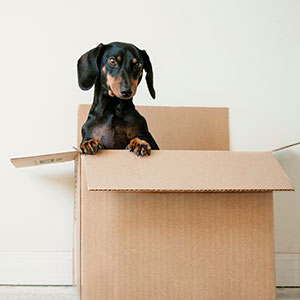 Puppy inside a Carboard box recycling RRRTX service